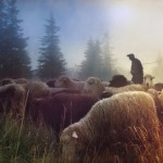 What constitutes a pastoral approach?